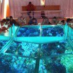 1093758730-Glass-Bottom-Boat-in-Sharm-El-sheikh