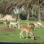africa-safari-park-with-deers-at-africa-safari-park-cairo-alexandria-highway-egypt-5